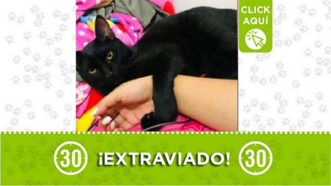 Este gatico que responde al nombre de 'Salem' o 'Michi se perdió en la noche del pasado domingo 1 de agosto en el sector de San Francisco en Itagüí.