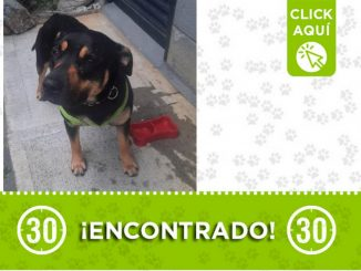 Encontraron este perrito en Robledo - Pajarito