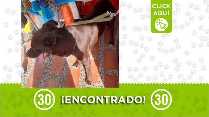 Encontraron este perrito en Itagüí ¿Es suyo?