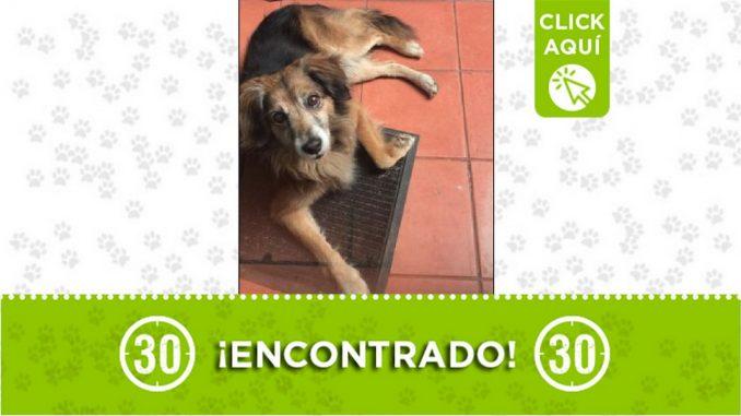 Buscan a los dueños de este perrito encontrado en Robledo