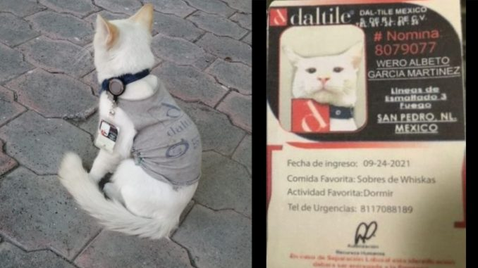 ¡Qué ternura! Empresa 'contrató' a un gatico como vigilante