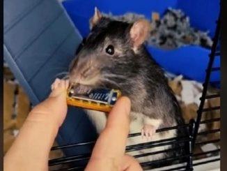 Mr. Blik rata viral tocar la armonica