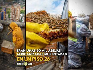 Que monton Rescataron un nido de abejas en la terraza de un edificio en El Poblado
