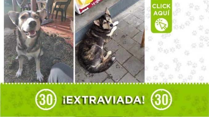 """""""Tila"""" se perdió en Girardota ¡Comparte!"""