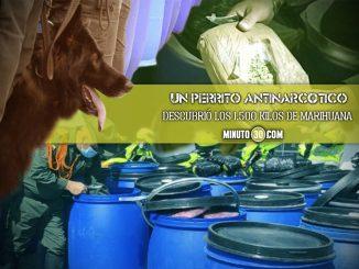 [Video] Le pillaron en un camión 19 canecas repletas de marihuana que tendría como destino Medellín