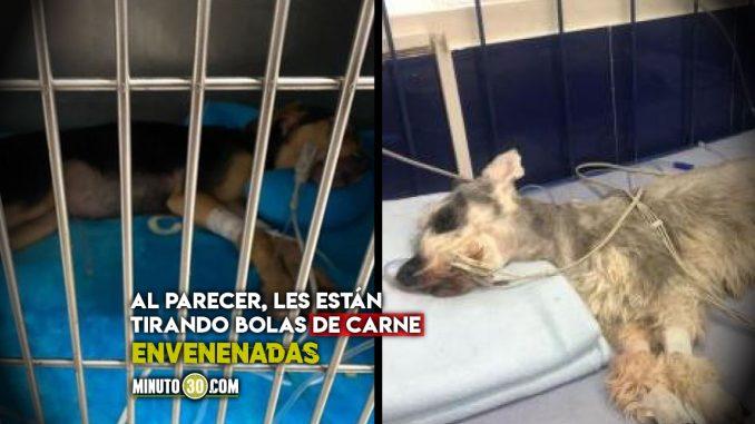 Denuncian envenenamiento masivo de perros en una unidad de Robledo