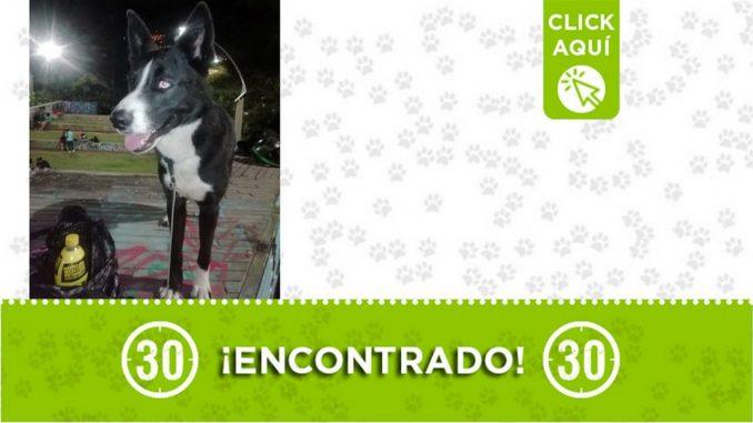 Buscan a la familia de este perrito encontrado en Tricentenario
