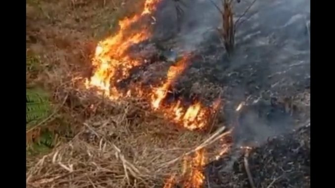 Bomberos lograron controlar incendio en vereda de Sabaneta