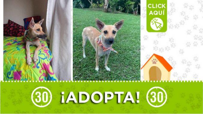 """""""Mia"""" busca un hogar ¡Adopta!"""