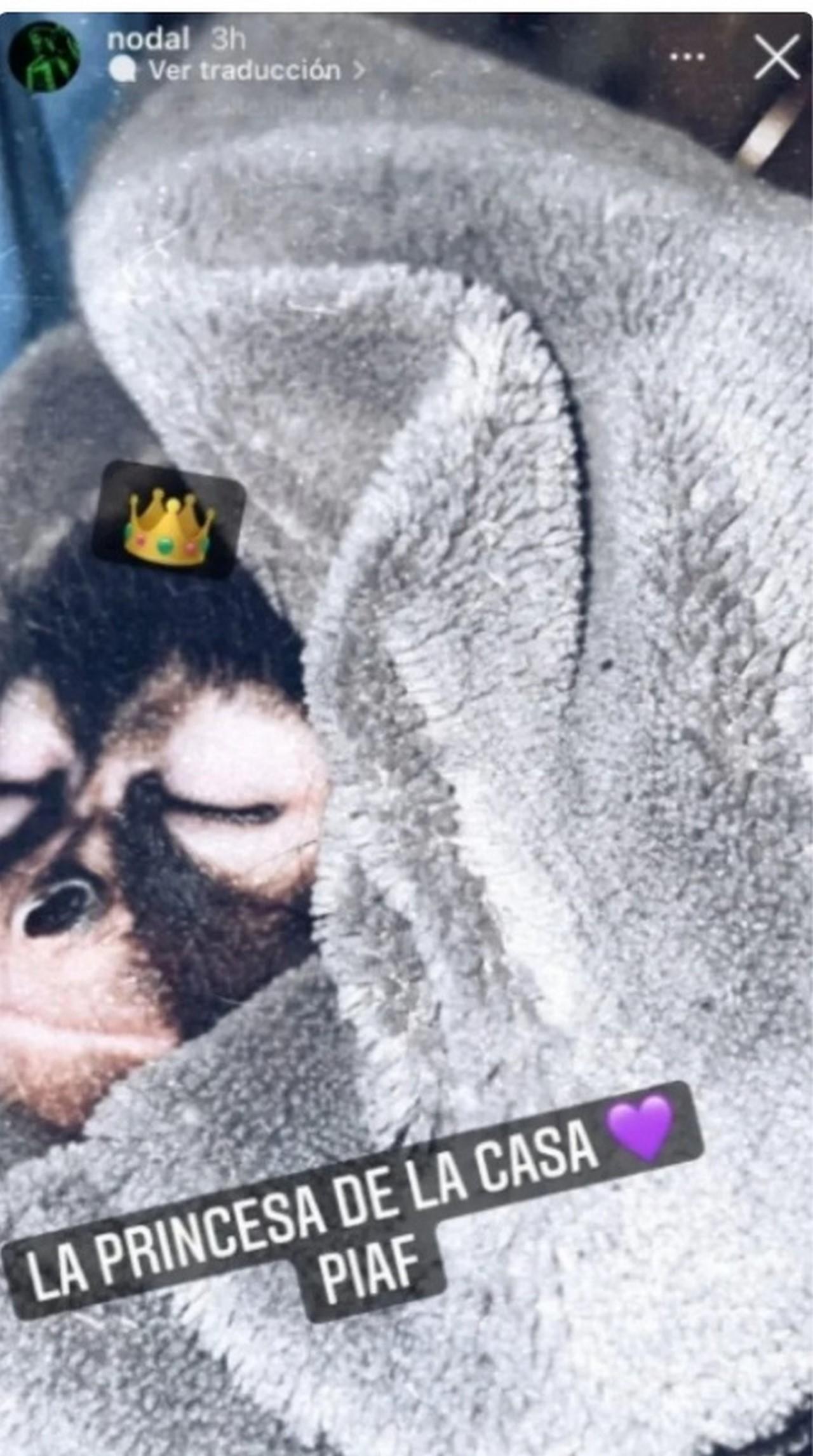 nodal mono mascota