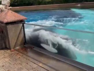 orca paque golpea vidrio