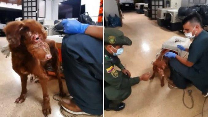 rescataron a una perrita mal tenida en Medellín
