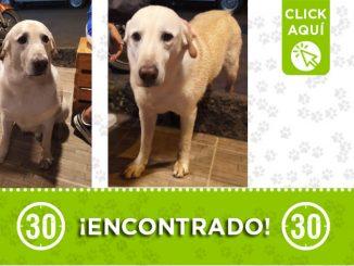 Este perrito fue encontrado en Robledo Bello Horizonte ¿Es suyo?