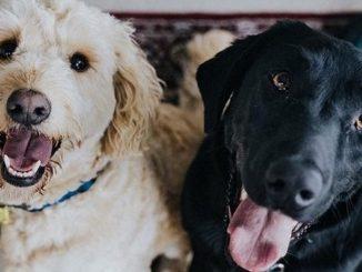 perros mascotas dos