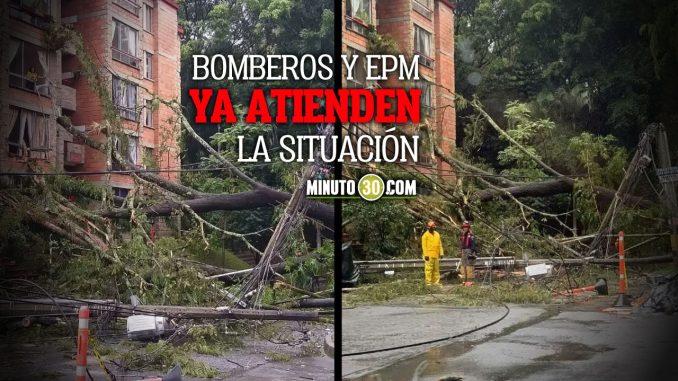 Se cayeron varias árboles y postes de luz en Envigado
