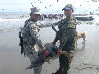 Liberaron una tortuga marina que había sido capturada por pescadores