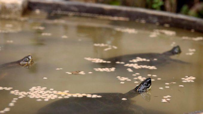tortugas medellin