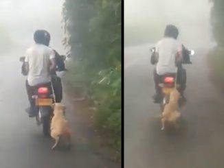[Video] ¡Malditos! Arrastraron a un perrito por una vía en Risaralda
