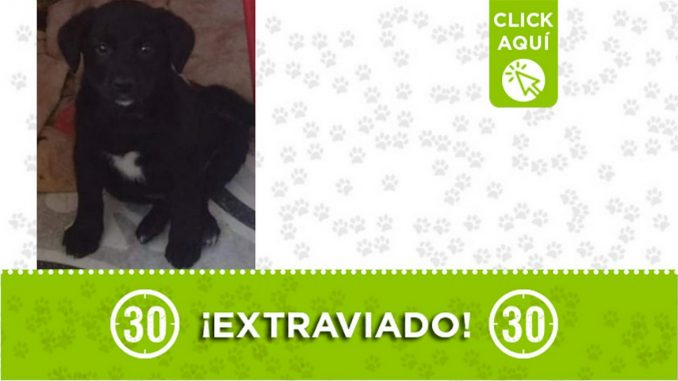 """Este cachorrito responde al nombre de """"Lucas"""" y se extravió en San Antonio de Prado"""