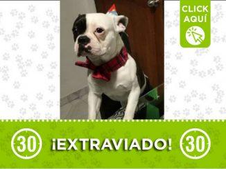 Chester perro perdido San Cristobal 2021