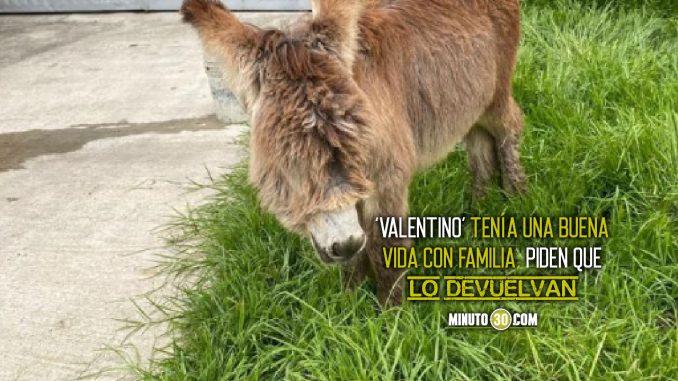 Valentino el burro
