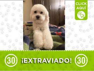 Medellin perro Ozzy perdido barrio 12 de Octubre