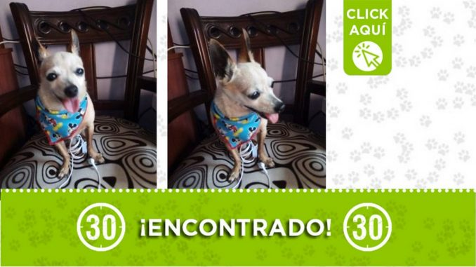 ¿Lo conoce? Este perrito fue encontrado en el barrio San Gabriel de Itagüí