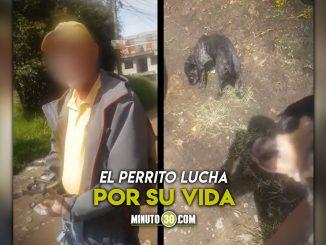 [Video] Un tipo casi mata de un golpe a un perrito en Carmen de Viboral