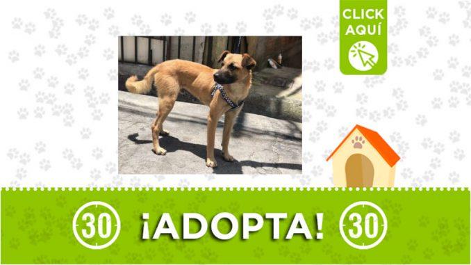 Medellín-adopta1