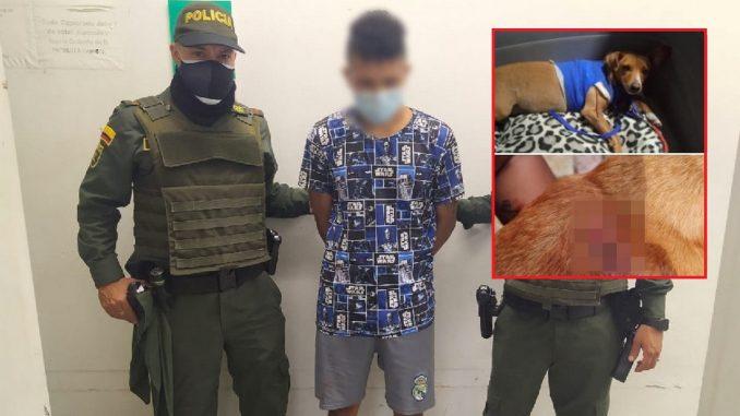 Lo cogieron en Itagüí por presunto maltrato animal