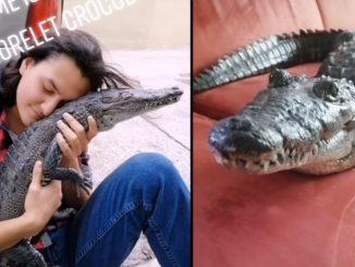 El cocodrilo que se cree perro y que se ha viralizado en TikTok