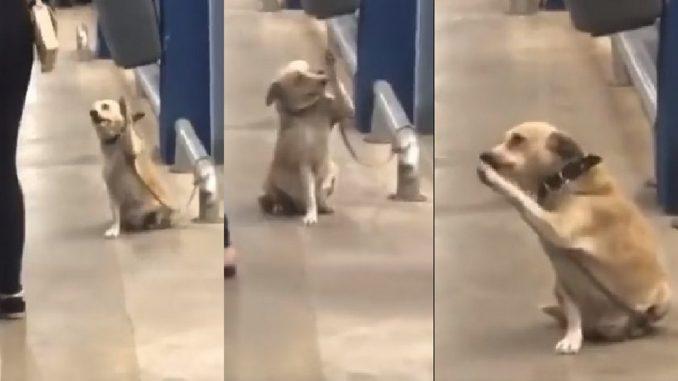 El perrito que se 'despide' de todos en un supermercado