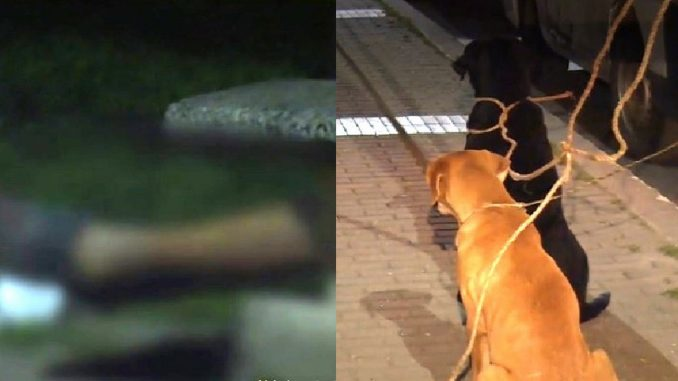 Perritos custodiaron el cuerpo de su dueño que murió, al parecer, en trágica riña