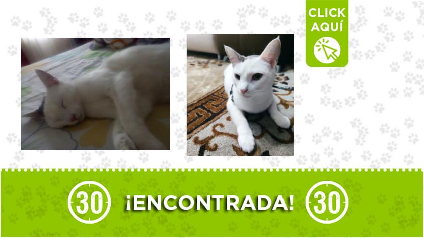 Esta gata fue encontrada en el sector Loma de los Bernal ¿la reconoce?