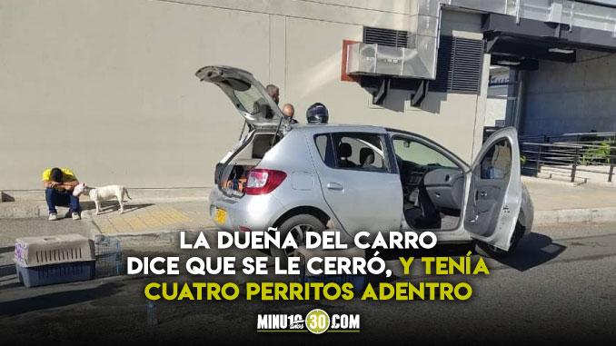 Que tristeza Denuncian que dos perritos murieron asfixiados dentro de un carro en Rionegro