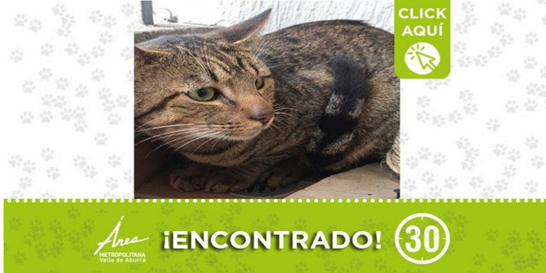 Este gatico fue encontrado en Envigado